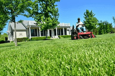 AERATING AND DETHATCHING OF LAWNS IN EL DORADO