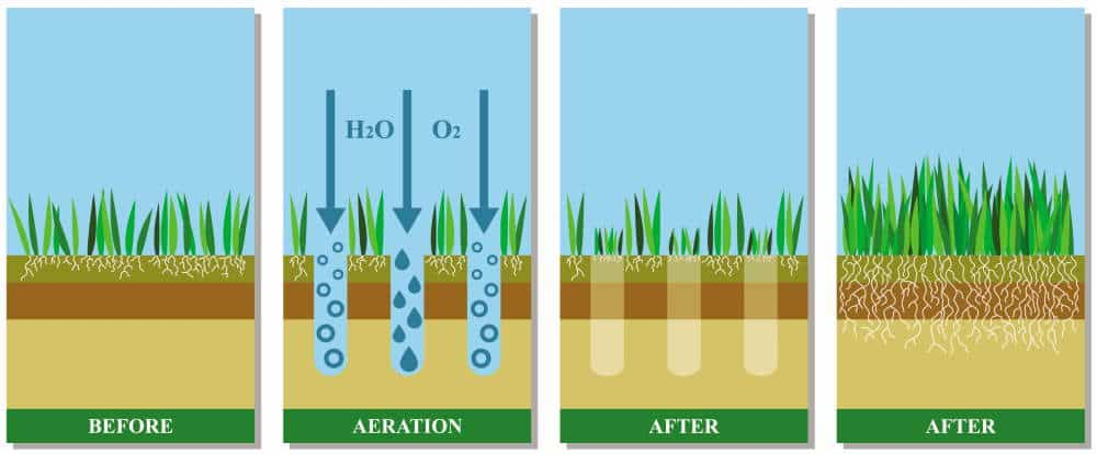 Lawn Aeration Service and Overseeding