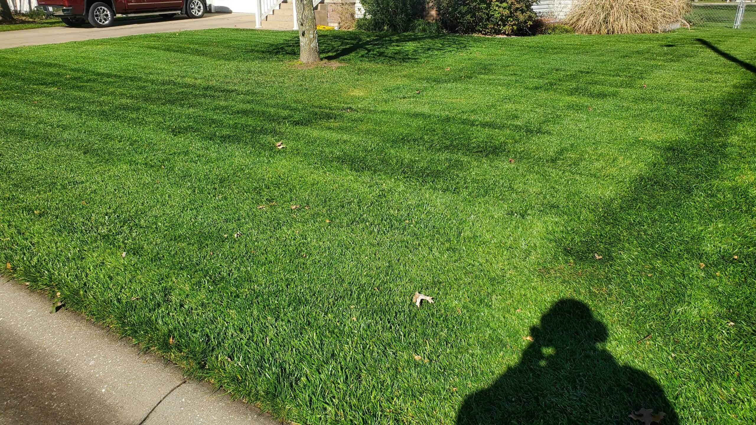 keep your lawn full and healthy