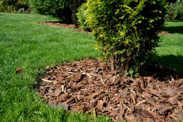El Dorado, KS - Mulch can improve the look of your lawn and protect your soil!